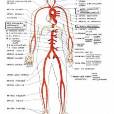 Materiale biologie pentru admiterea la medicina