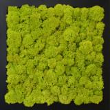 Tablou licheni Artflora Uni GreenLime MDFnegru 25CM