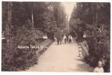 5206 - TARGU-JIU, Public Garden, Romania - old postcard, real PHOTO - unused