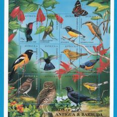 Antigua & Barbuda - FAUNA - PASARI - Nestampilat