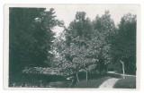 4353 - CRAIOVA, Bibescu Park, Romania - old postcard, real PHOTO - unused