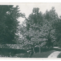 4353 - CRAIOVA, Bibescu Park, Romania - old postcard, real PHOTO - unused, Necirculata, Fotografie