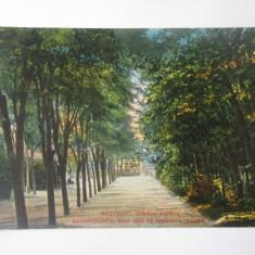 Carte postala Bazargic/Dobrici-Cadrilater/Dobrogea de Sud,circulata 1930