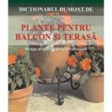 Plante pentru balcon si terasa