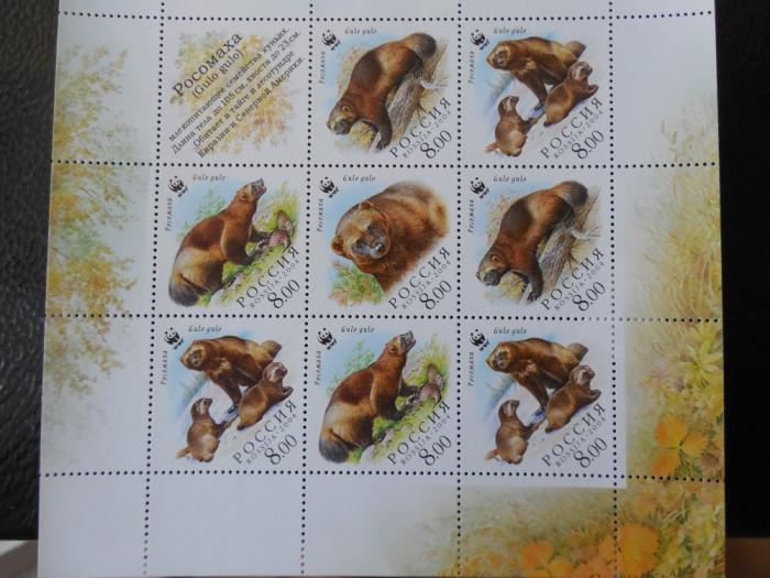Bloc serie timbre fauna animale nestampilate Rusia WWF timbre filatelice postale