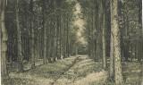Recita Padurele Resita padurile carte postala, Circulata, Printata