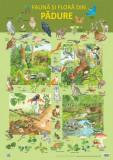 Plansa - Fauna si flora din padure | Nelson Verlag, Didactica Publishing House