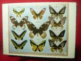 Ilustrata - Colectie de Fluturi Malaezi - Muzeul Antipa ,anii'70 Ed.Meridiane, Necirculata, Printata