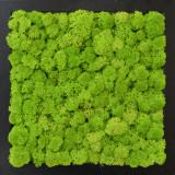 Tablou licheni Artflora Uni GreenApple MDF Negru 25CM