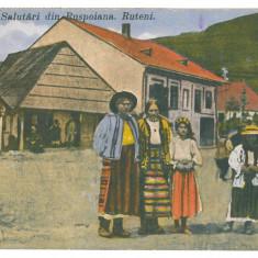 4609 - POIENILE de sub MUNTE, Maramures, ETHNICS - old postcard - used - 1929, Circulata, Printata