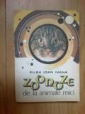 a2 Zoonoze de la animale mici - Filea Ioan Ivana