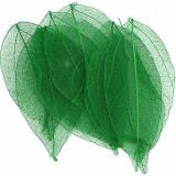 Frunze uscate – verzi închis