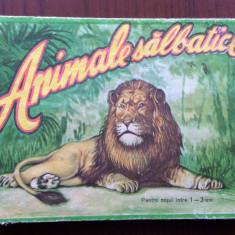 Cauti Carte Povesti Leul Lester Imagini Cu Animale