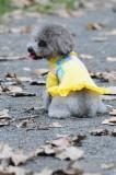 Pulover rochita tricotata - Dolly - 35 cm - 72377