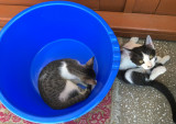 Donez doua pisicute jucause