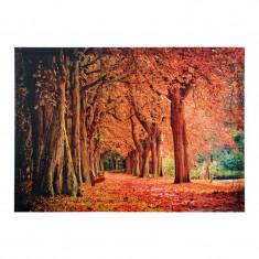 Tablou decorativ Autumn Park, 70 x 50 cm