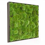 Cumpara ieftin Tablou vegetal muschi bombati ARTFLORA 50x50CM