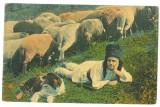 4191 - ETHNIC, Shepherd, Romania - old postcard - used - 1913