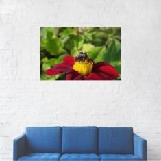 Tablou Canvas, Insecta de pe floare - 80 x 120 cm