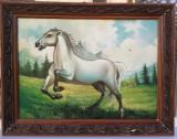 Tablou Cal Armăsar în galop pictura ulei pe panza inramat 61x77cm, Animale, Realism