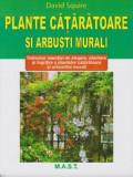 Plante cataratoare si arbusti murali | David Squire
