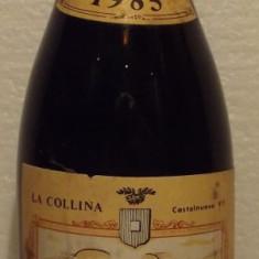 67VIN bonarda, vin frizzante,fermentazione naturale, recoltare 1985 cl 75 gr 8+3