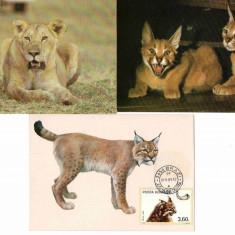 Fauna, Feline, Maxime