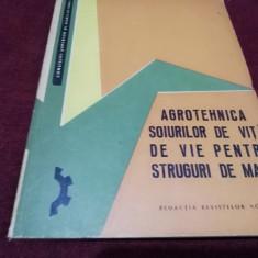 AGROTEHNICA SOIURILOR DE VITA DE VIE PENTRU STRUGURII DE MASA