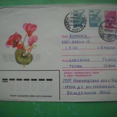 HOPCT  PLIC S 1501 CYCLAM ROZ-   FLORI  RUSIA