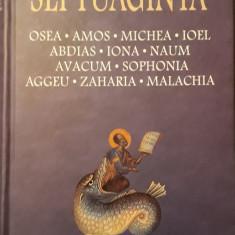 Septuaginta 5