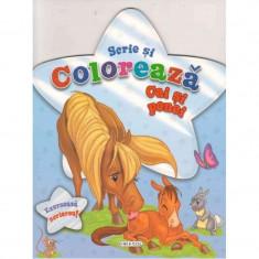Carte Scrie si coloreaza cai si ponei Girasol, 68 pagini, 64 desene, 4 ani+