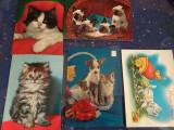 Carti postale Pisici