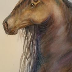Acuarela studiu cal (tablouri tablou picturi pictura grafica decor)