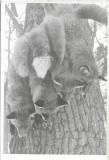 Fotografie trofee vanatoare vulpi