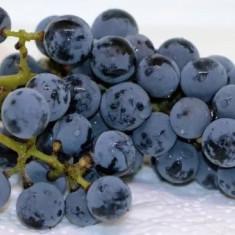 Vin rosu de tara