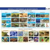 Animale vertebrate si nevertebrate. Plansa - Florica Alexandrescu