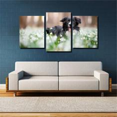 Tablou canvas pe panza animals 7 - KM-CM3-ANM7