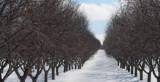 Pachet-tratament pomi fructiferi in repaus vegetativ