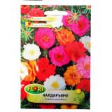 Seminte flori Florian Floare de piatra mix 0.5 g