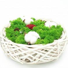 Cumpara ieftin Aranjament cu licheni naturali stabilizati si flori de bumbac, 27x8 cm