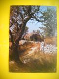 HOPCT 61660  OCCITANIA -LOCUINTA PREISTORICA  -FRANTA-CIRCULATA