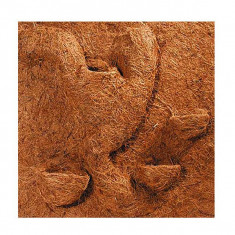 Decor terariu NUCĂ DE COCOS COCONUT 40x40cm