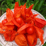 Physalis alkekengi - 10 seminte pentru semanat - comestibila si delicioasa.