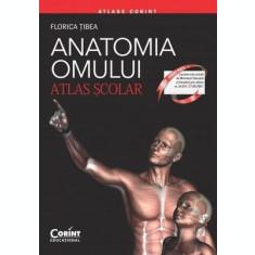 Anatomia omului. Atlas școlar
