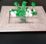 Tablouri cu licheni , trandafiri criogenati