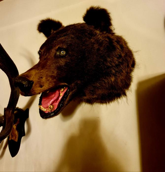 Vând trofeu de urs