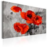 Tablou canvas - Maci de otel - 120 x 80 cm, Artgeist