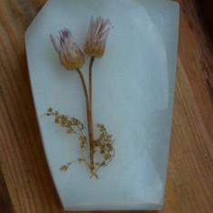 Floare adevarata in rasina / Floare superba conservata