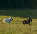 Ferme de cai