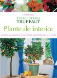Plante de interior ( Enciclopedia Truffaut )